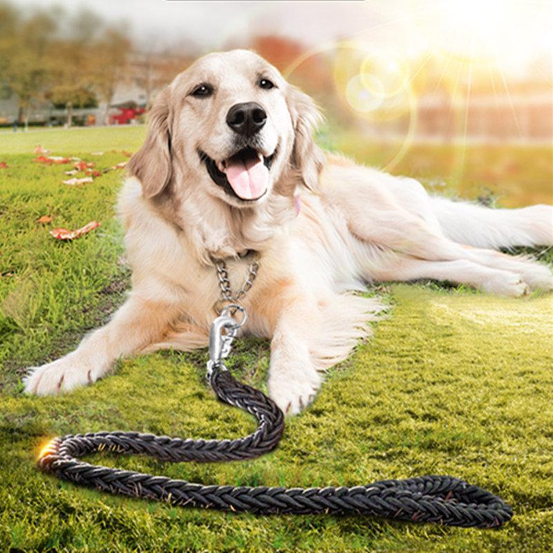 come treno golden retriever cani come treno retri d'oro