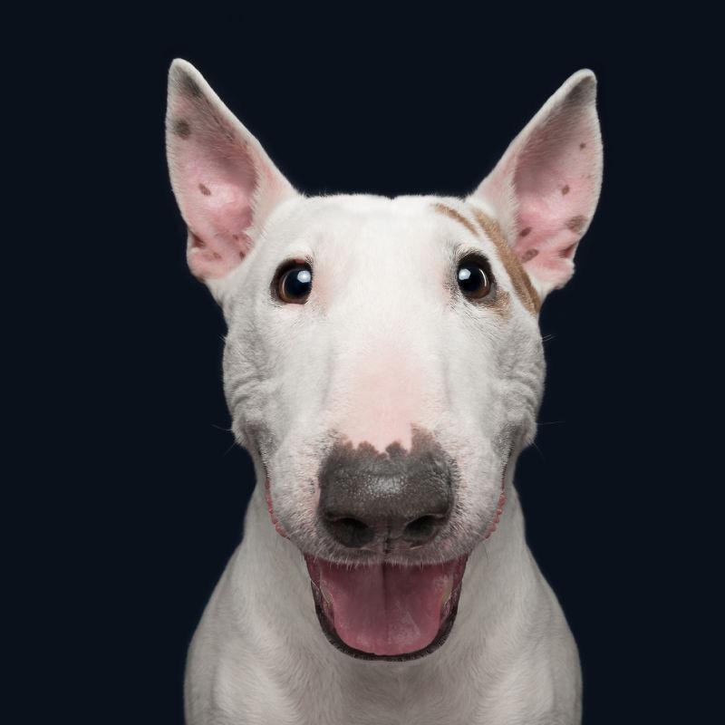 Cosa succede se il cane non ascolta? Come fai ad avere un cane per seguire le istruzioni?